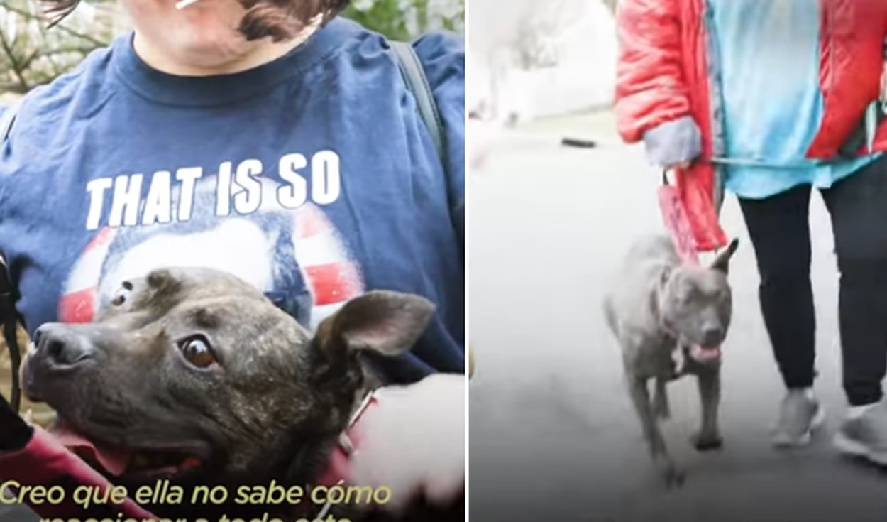 El video ha sido compartido en el canal El Dodo. Foto: captura de YouTube